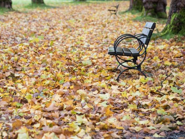 6 Tips for Shooting Fall Foliage
