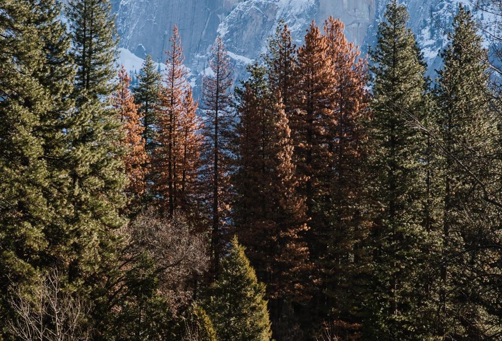 Let's Visit Yosemite National Park!